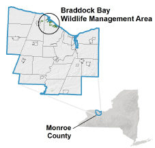 Braddock Bay WMA locator map
