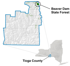 Beaver Dam State Forest locator map