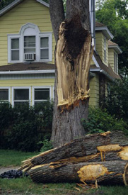 Care And Pruning Of Damaged Trees Nys Dept Of