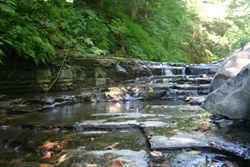 The Brook at Buck's Brook State Forest