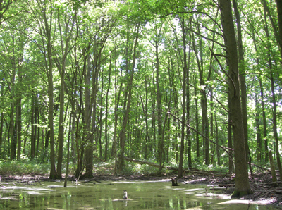 Butler Manor woods