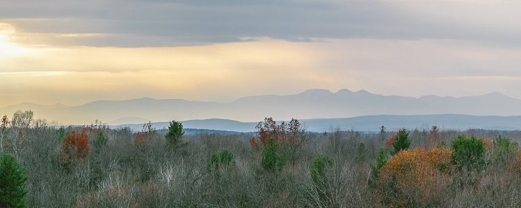 A view of the top of the forest at dusk with mountains in the background