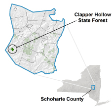 Clapper Hollow State Forest