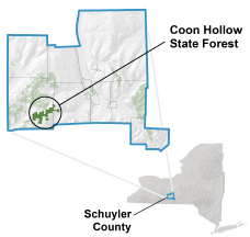 Coon Hollow State Forest