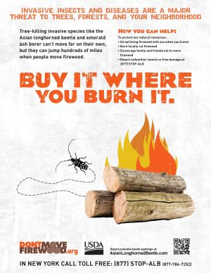 Buy it where your burn it firewood poster