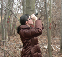 person looking for signs of emerald ash borer
