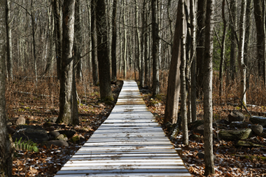boardwalk through woods