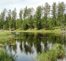 Grassy Pond on the Sable Highlands Conservation Easement