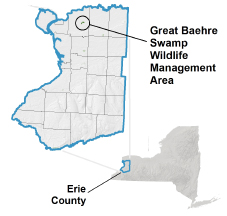 Great Baehre Swamp WMA locator map