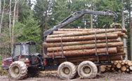 harvested timber on truck