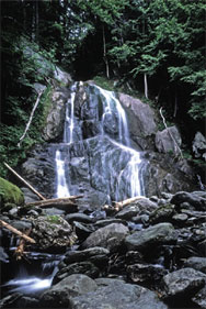 view of waterfall surrounded by forest