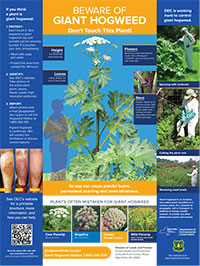 thumbnail of giant hogweed awareness poster