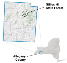 Gillies Hill State Forest locator map