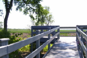 Accessible observation deck with benches, overlooking marshlands