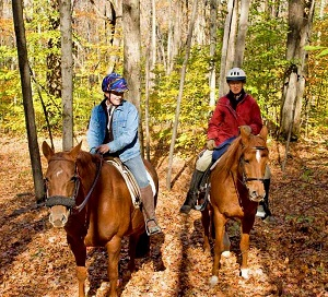 two people horseback riding in New York's forest