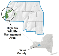 High Tor Wildlife Management Area - NYS Dept  of