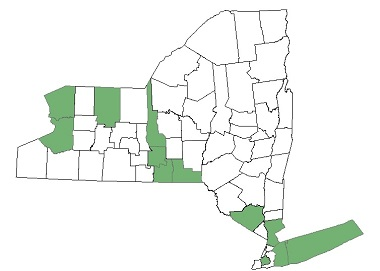 2016 Distribution map of Hydrilla in New York State
