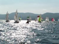 Image of sailboats participating in a regatta