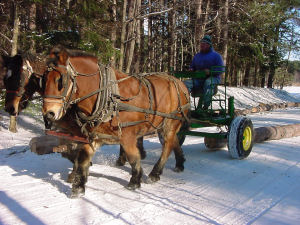 Two horses pull a cart with a log attached, in the snow.