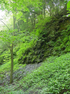 Green covered cliff.
