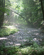 image of stream protected by forested land