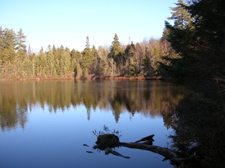 View of quiet pond with pine trees