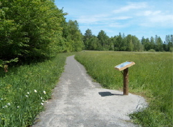 The path at Nelson Swamp