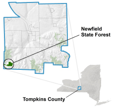 Newfield State Forest locator map