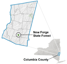 New Forge State Forest locator map