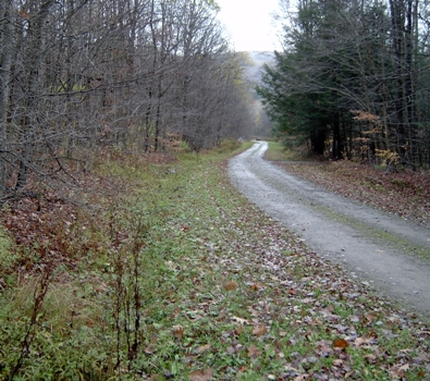 A road through Nine Mile State Forest