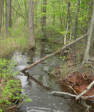 stream in North Mount Loretto