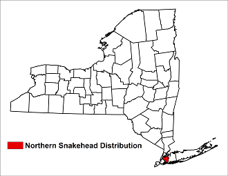 Distribution of northern snakehead in New York State