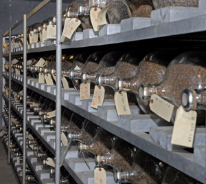 seeds in cold storage