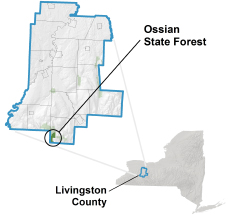 Ossian State Forest locator map