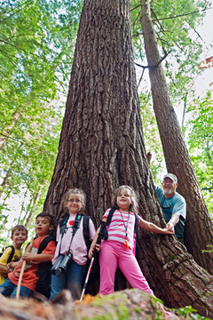 An adult, two boys and two girls hold hands around the base of a large tree in a forest.
