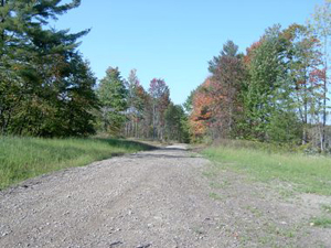 Raecher Forest Road