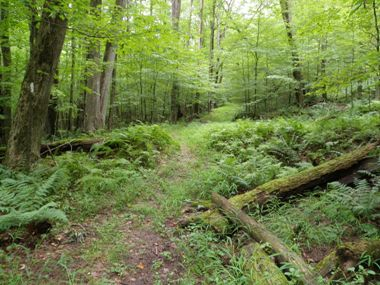 A trail in the forest with some downed trees