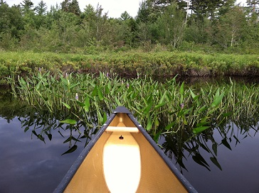 Paddle on Round Lake with a canoe in the water approaching land