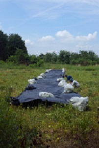 long black plastic in a field, with full garbage bags on the edges and two men.