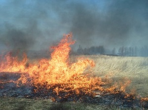 Grass burning at Rush Oak Openings.