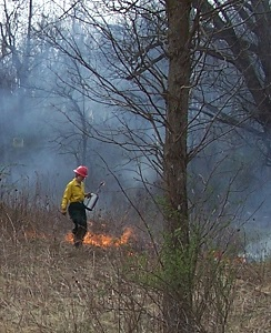 Image of forest worker starting a perscribed fire