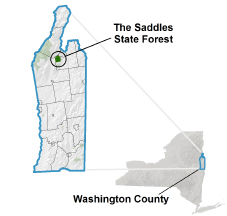 Saddles State Forest locator map