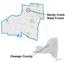 Sandy Creek State Forest locator map