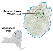 Saranac Lakes Wild Forest - NYS Dept  of Environmental