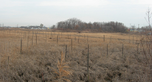 view across a field at Sawmill Creek