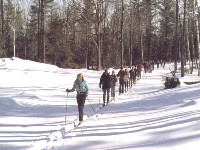 Cross Country skiiers on trail