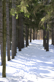cross country ski trail through a forest