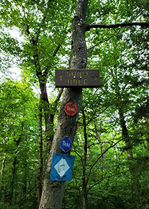Wooden sign on tree with trail markers