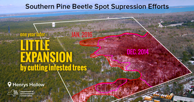 suppression cutting showed very little expansion in 1 year