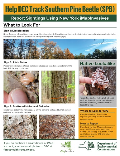 flyer with images and descriptions of signs of southern pine beetle